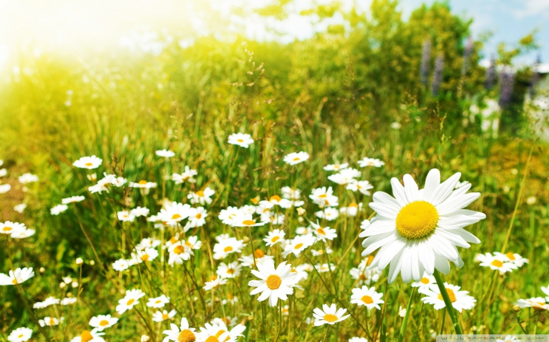 wildflowers_sunny_day-wallpaper-1920x12001